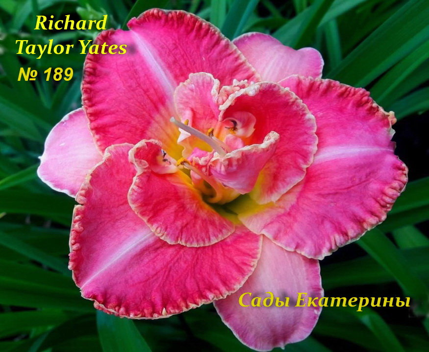 №189  Richard Taylor Yates