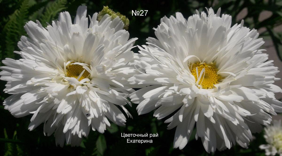 №27 Apollinaria
