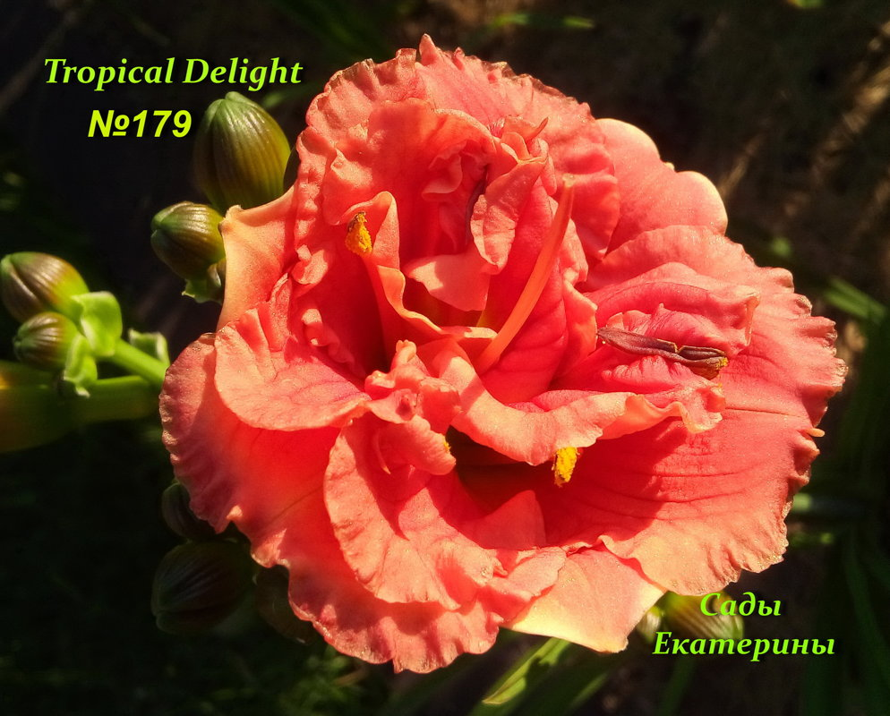 №179  Tropical Delight