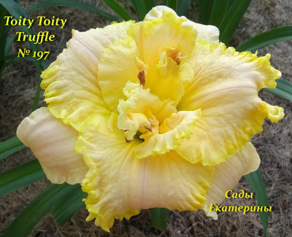 №197  Hoity  Toity  Truffle