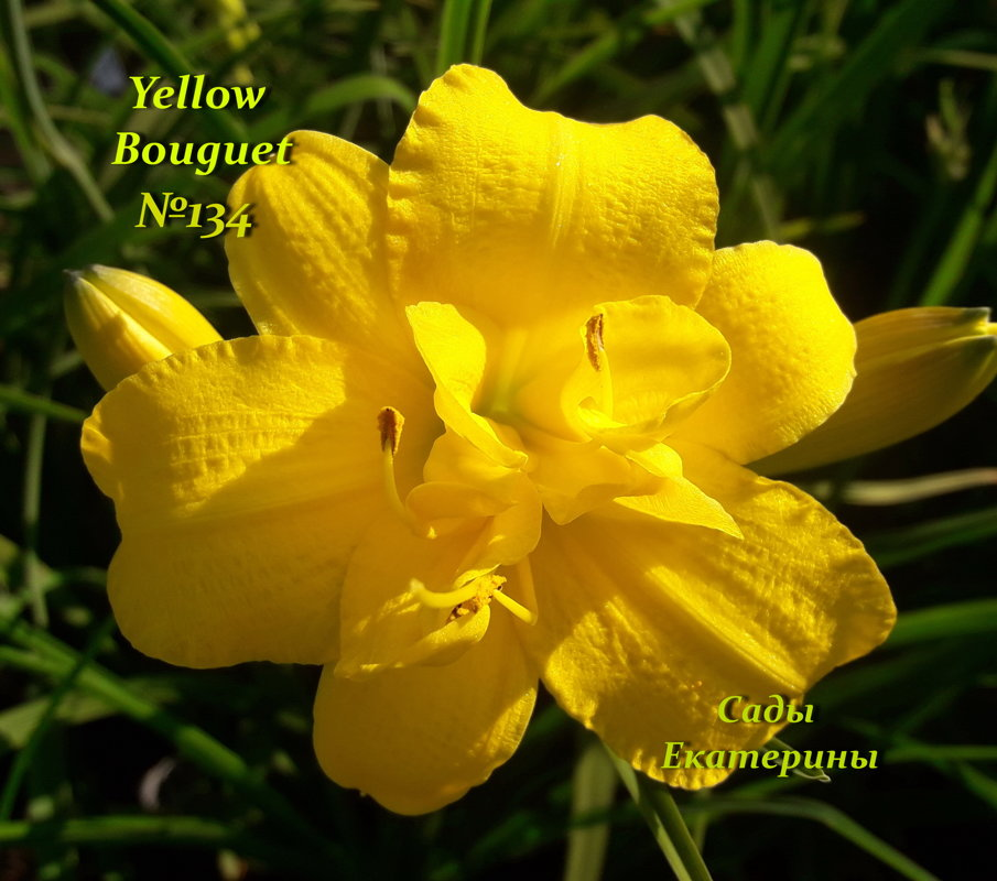 №134  Yellow Bouquet (  Йеллоу Букет )