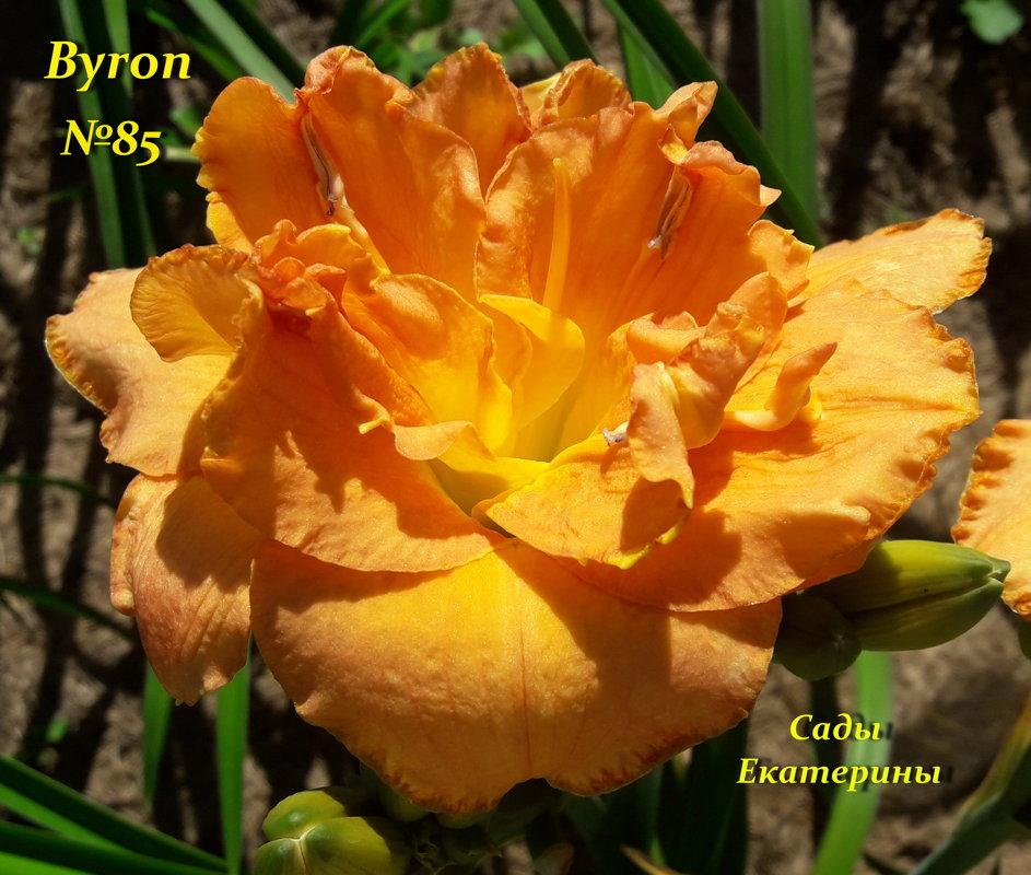 №85 Byron