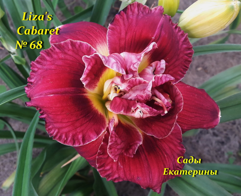 №68 LIZA'S CABARET