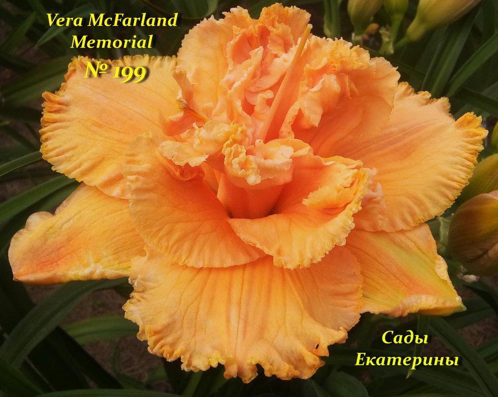 №199  Vera McFarland Memorial.