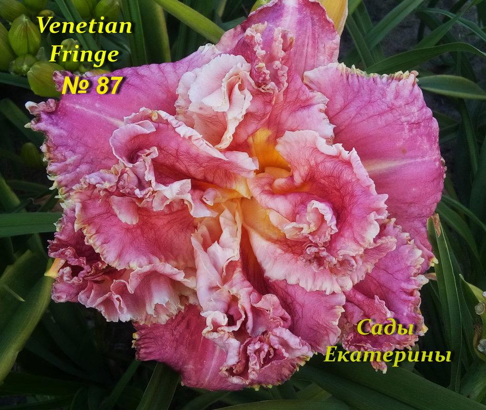 №87  Venetian Fringe (  Венециан Фриндж )