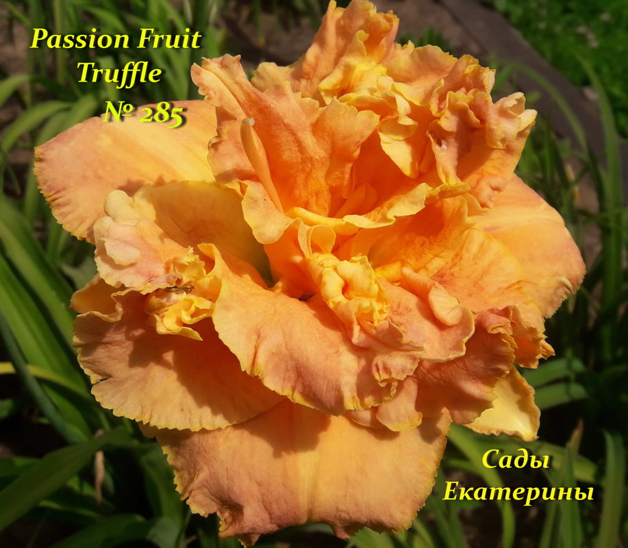 №285   Passion Fruit Truffle