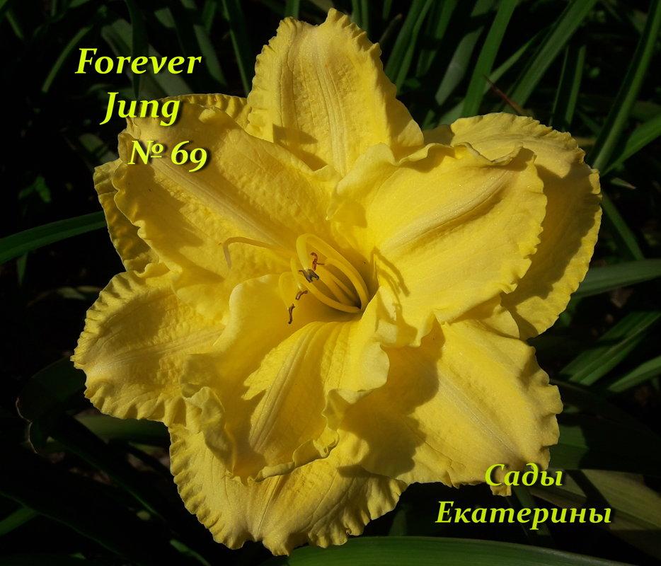 №69  Forever Jung ( Фореве Джанг) .