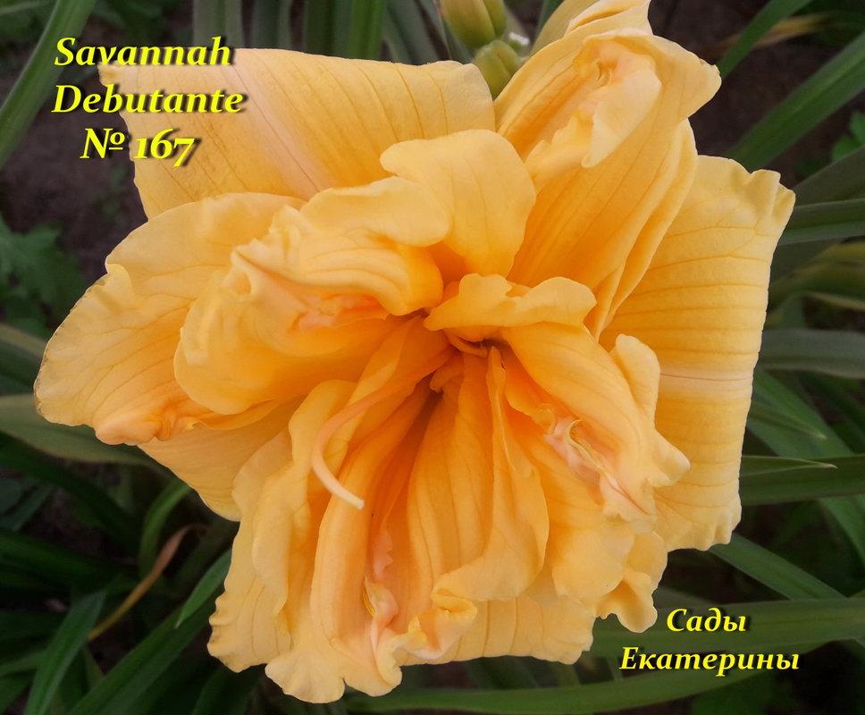 №167 Savannah Debutante
