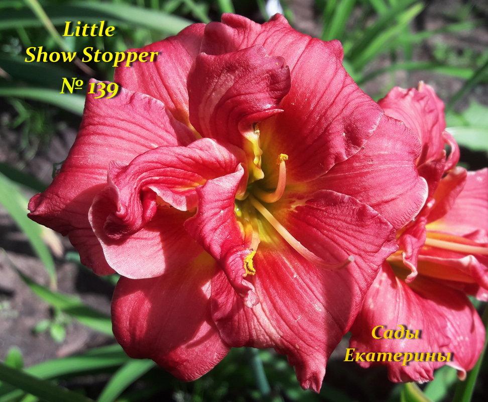 №139   Little Show Stopper ( Литл Шоу Стопе)