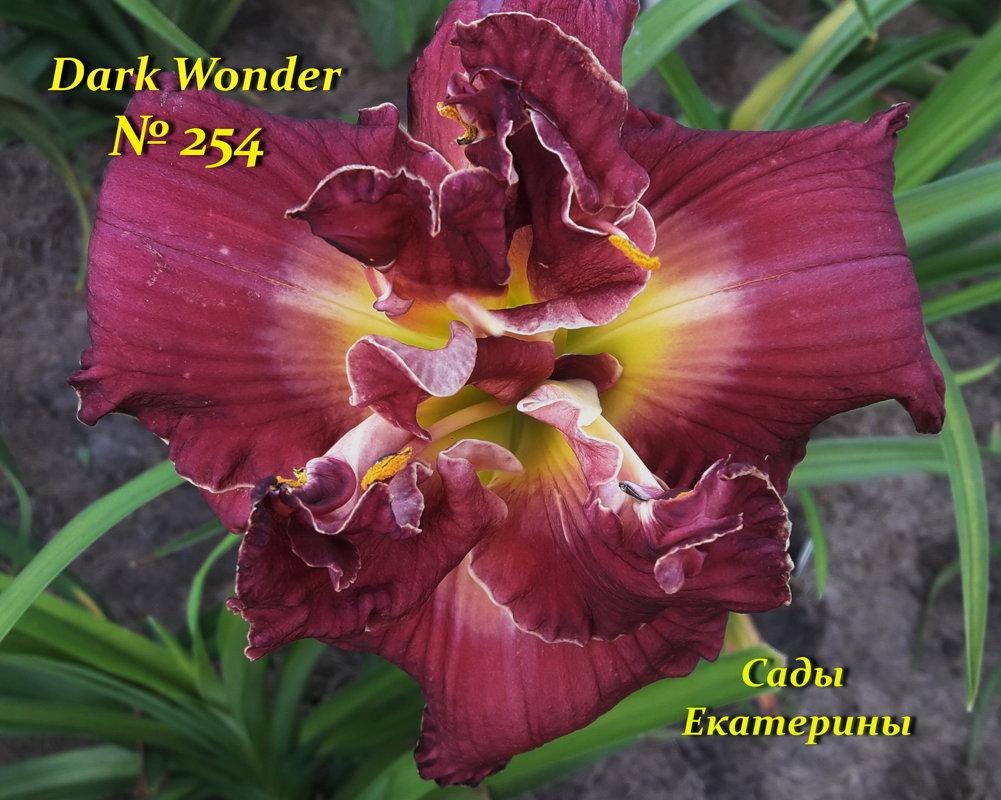 № 254 Dark Wonder