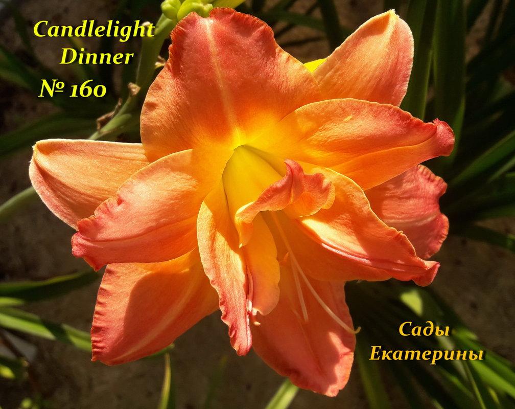 №160 Candlelight Dinner ( Кэндллайт Диннер )