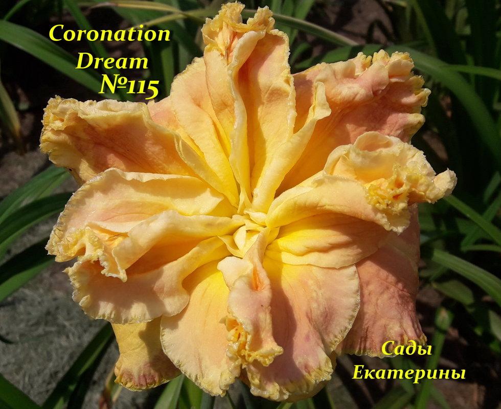 №115  CORONATION DREAM  ( Коронейшен Дрим  )