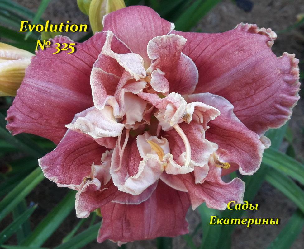 № 325  EVOLUTION.
