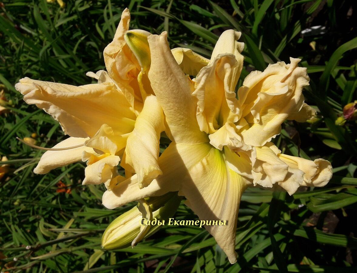 №214  Fluttering Beauty