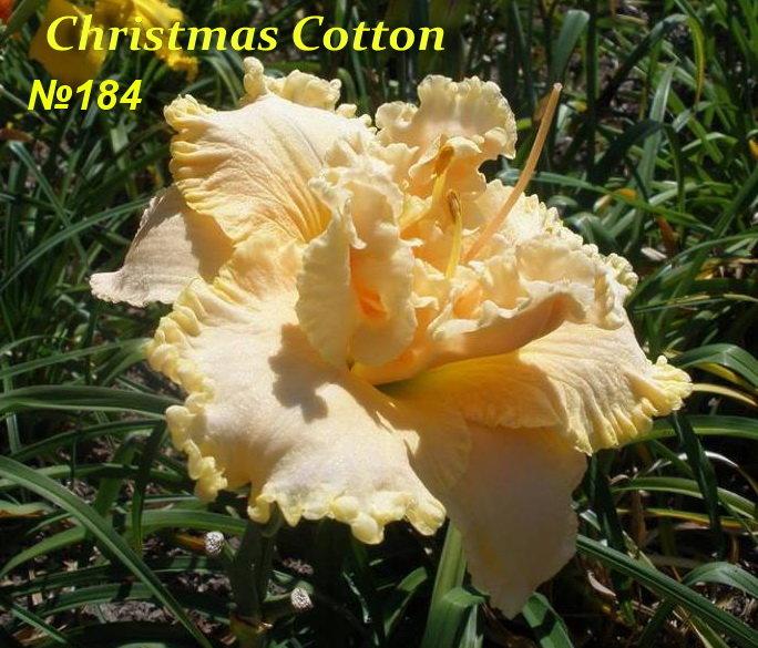 №184  Christmas Cotton