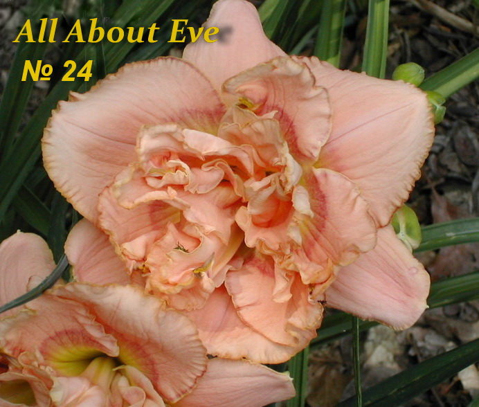 №24   All About Eve