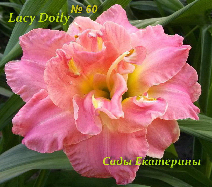 №60  Lacy Doily