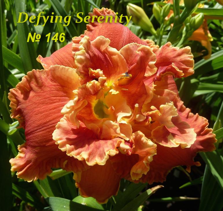 №146   Defying Serenity (Дэфинг Серенити)