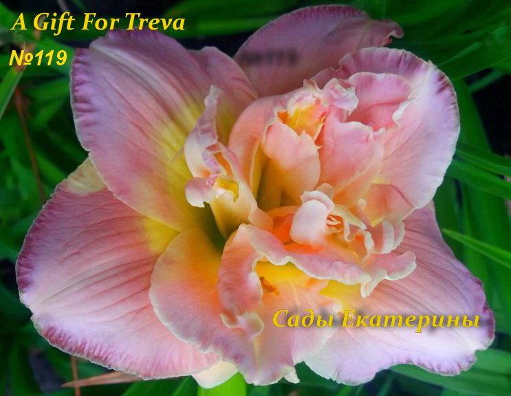 №119  A Gift for Treva