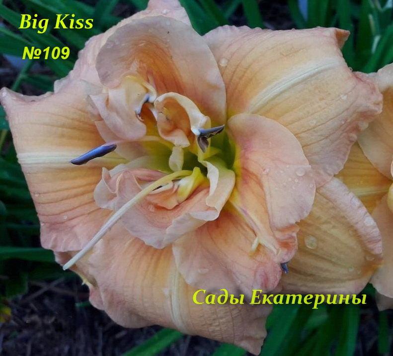 №109  Big Kiss ( Биг Кисс)