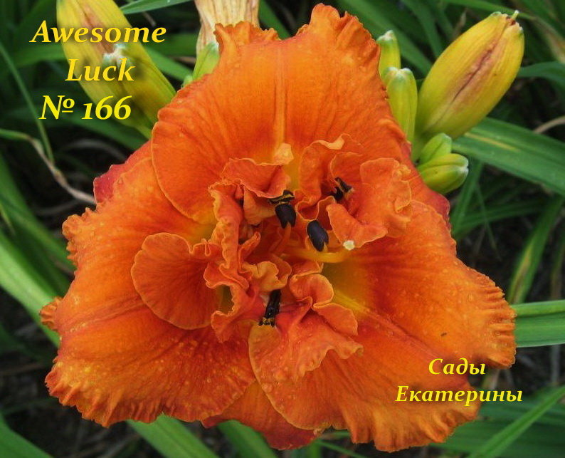 №166   Awesome Luck