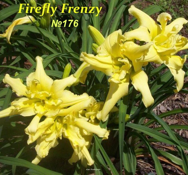 № 176   FIREFLY FRENZY