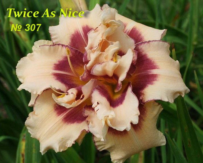 №307 Twice As Nice