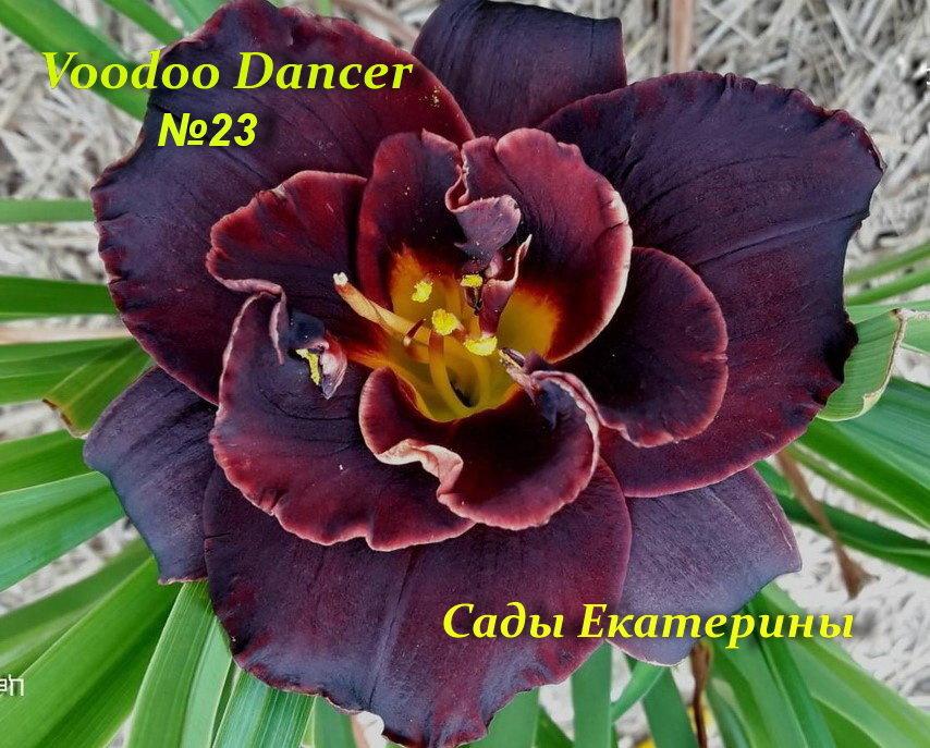№ 23  Voodoo Dancer ( Вуду Дансер)