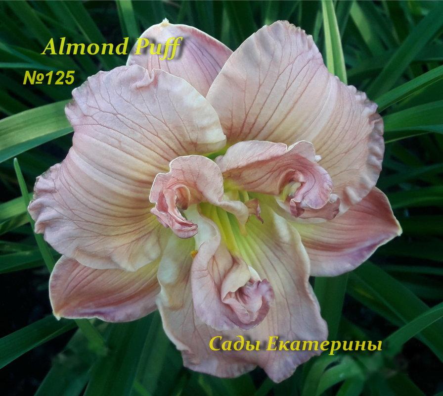№125 Almond Puff