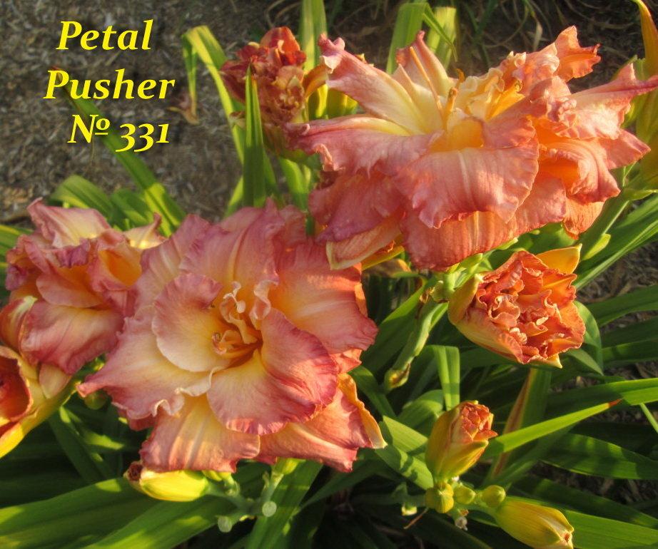 № 331  PETAL PUSHER