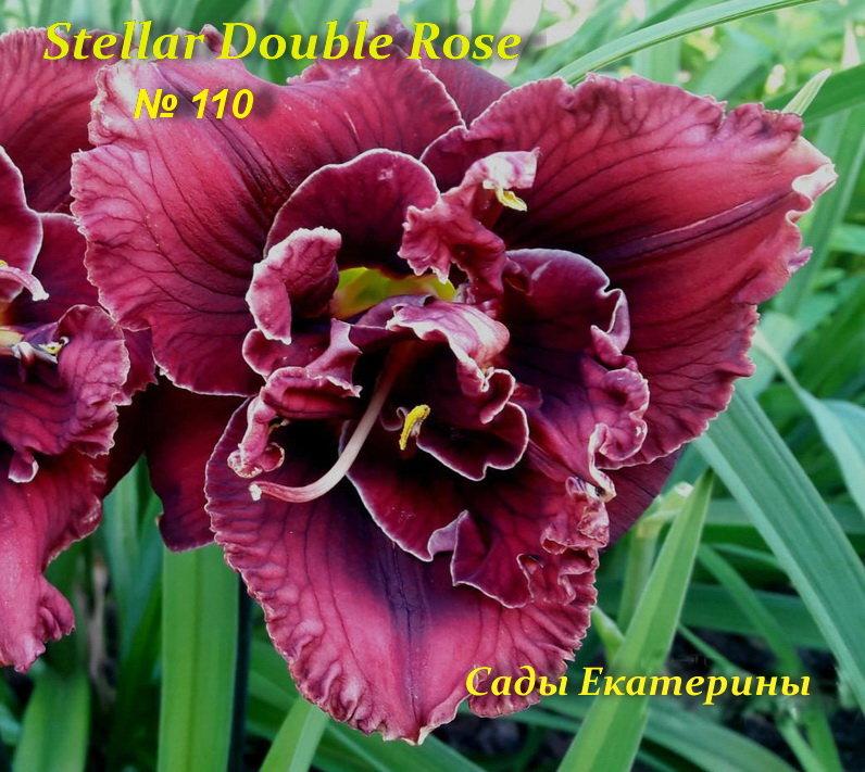 №110  Stellar Double Rose (Стеллар Дабл Роуз)