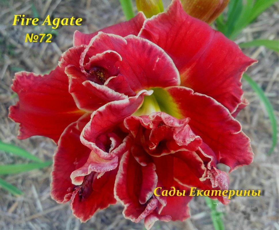 №72  Fire Agate ( Файер Агате)