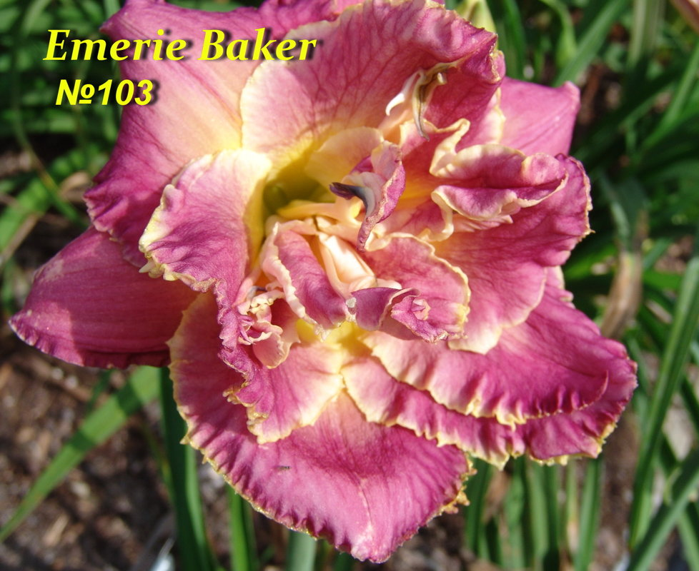 №103 Emerie Baker ( Имэии Бакэ )