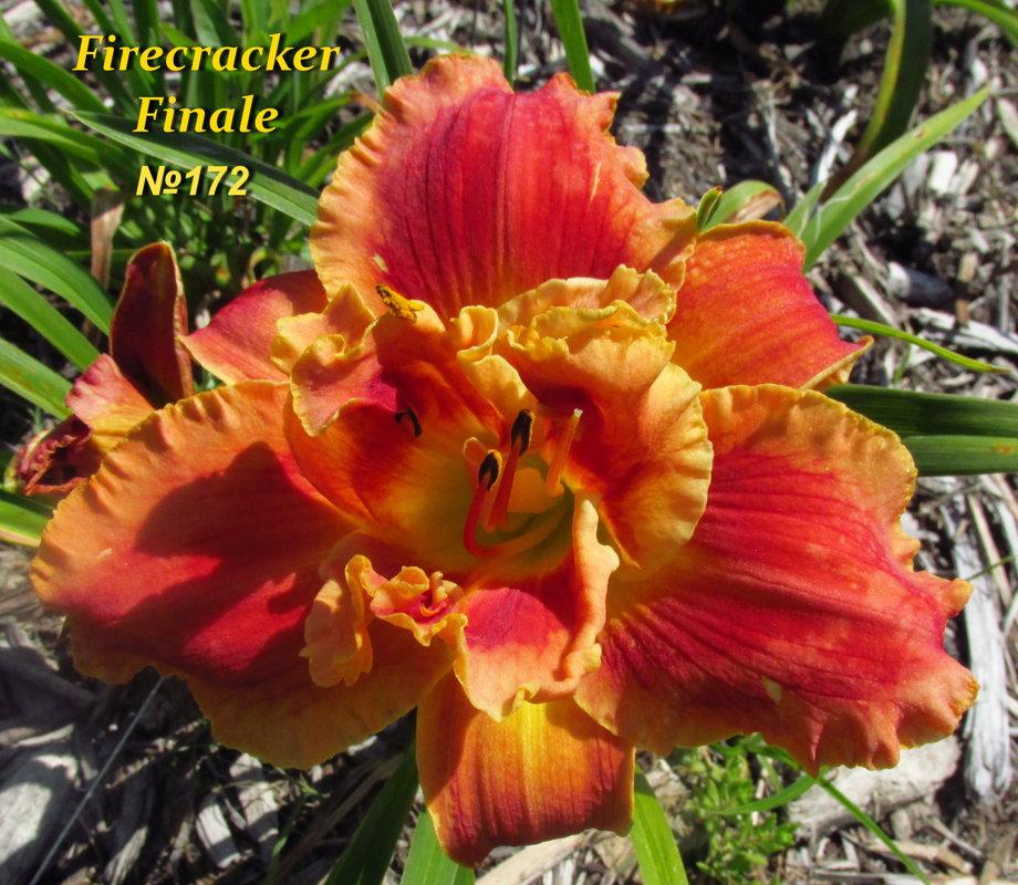 №172  Firecracker Finale