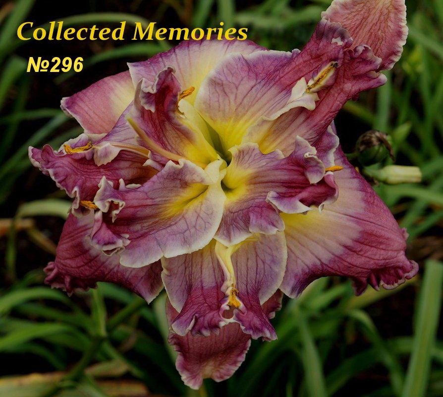 № 296  Collected Memories