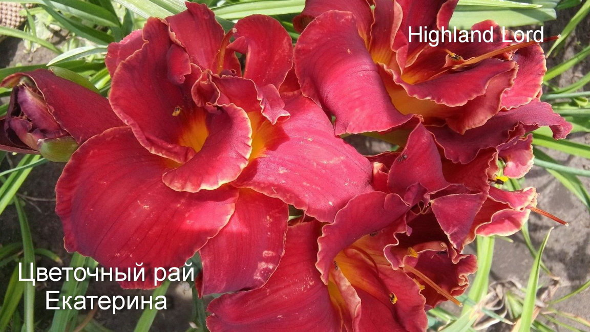 №8 HIGHLAND LORD ( Хайлерд Лорд)