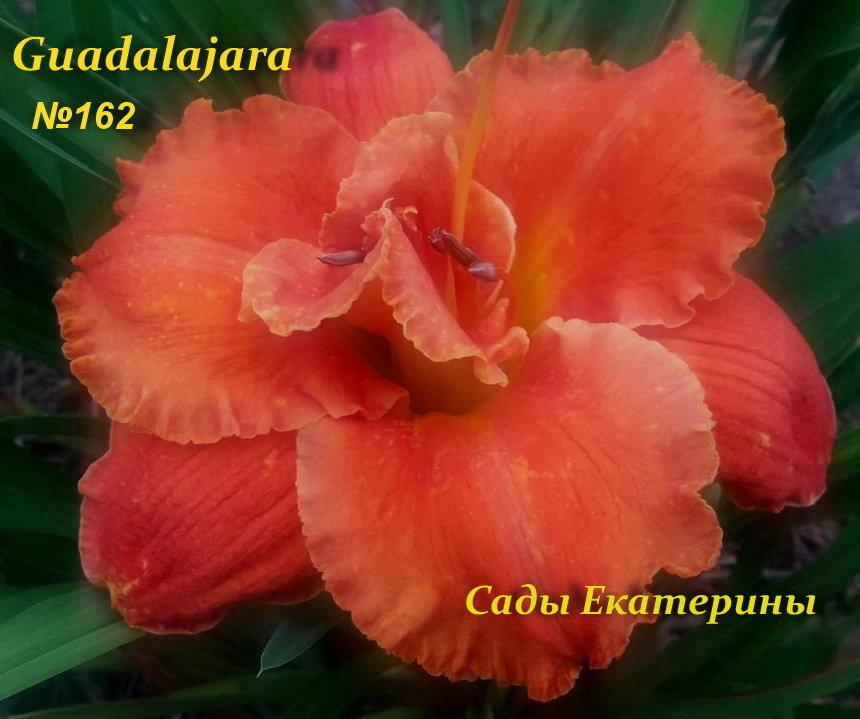 №162 Guadalajara