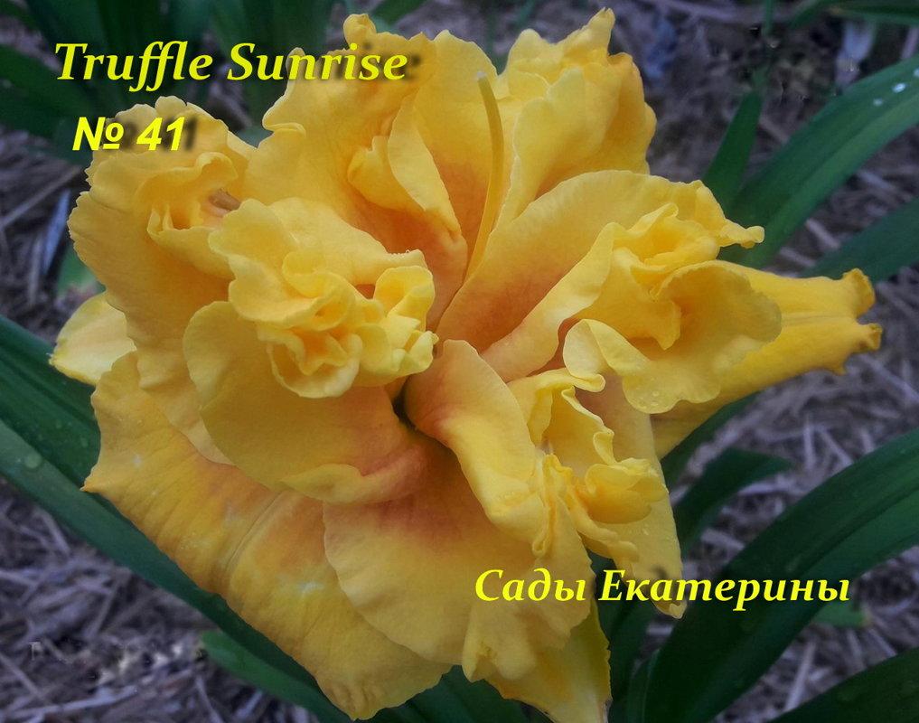 №41 Truffle Sunrise
