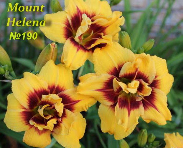 №190  Mount Helena