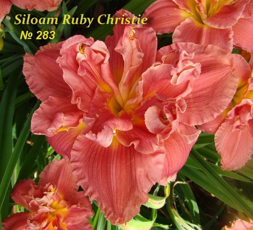 №283  Siloam Ruby Christie