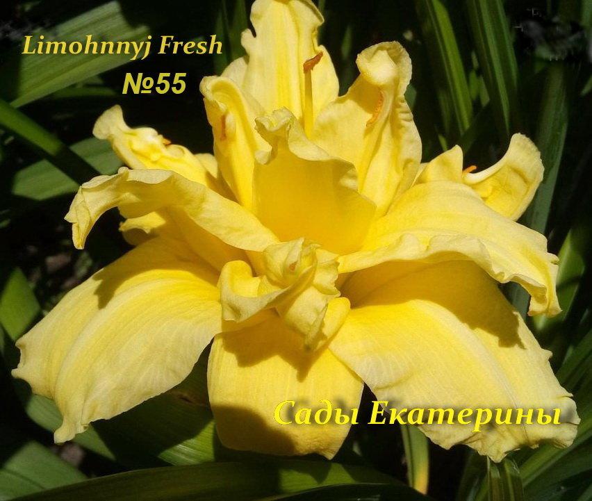 №55 Lemon Fresh   ( ЛИМОННЫЙ ФРЕШ )