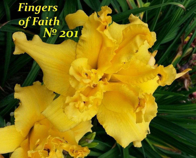 № 201 Fingers of Faith