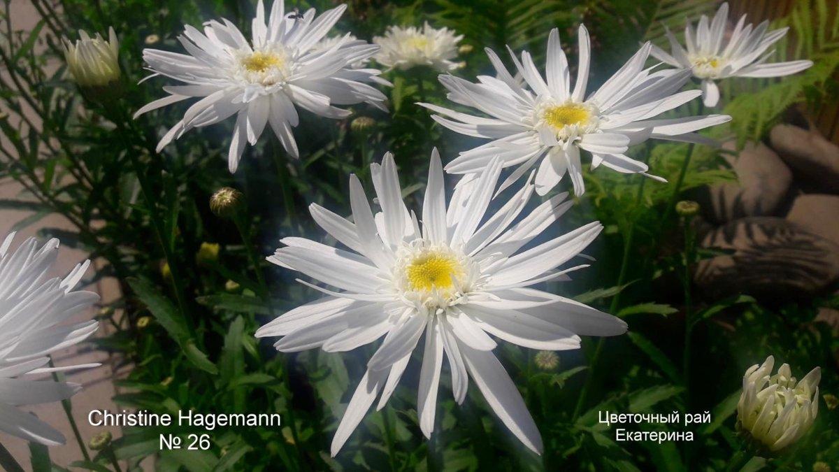 №26  Christine Hagemann
