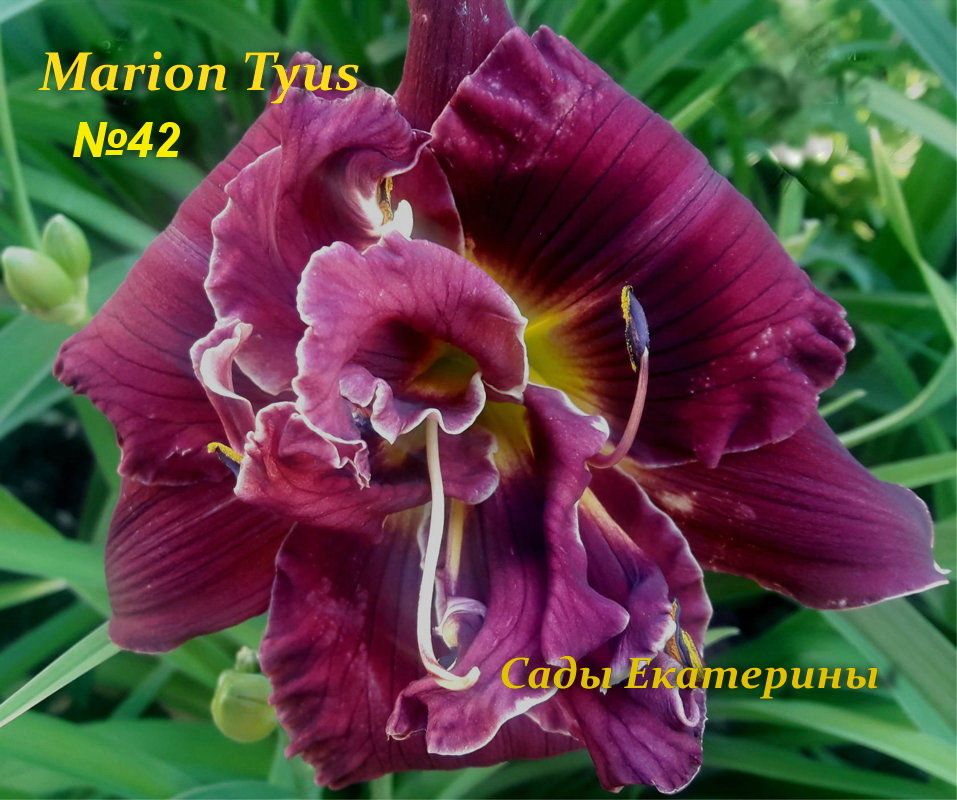 №42  Marion Tyus