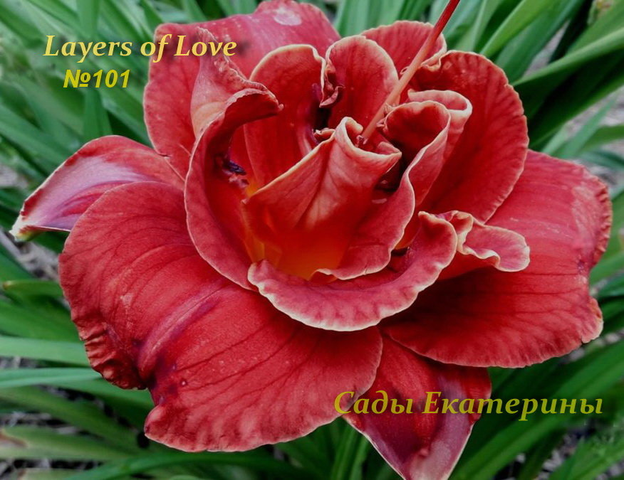№101  Layers of Love