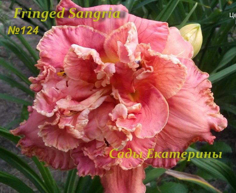 №124  Fringed Sangria