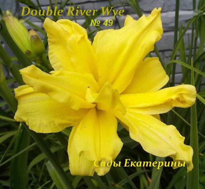 №49  Double River Wye (Дабл Ривер Вай)