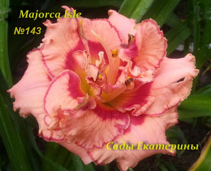 №143   MAJORCA ISLE