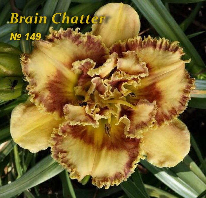 №149 Brain Chatter ( Брейн Чатер)