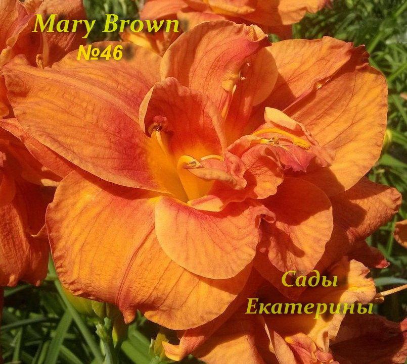 №46 Mary Brown (Мэри Браун)